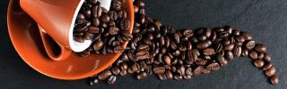 Curso Barista, el café y su mundo